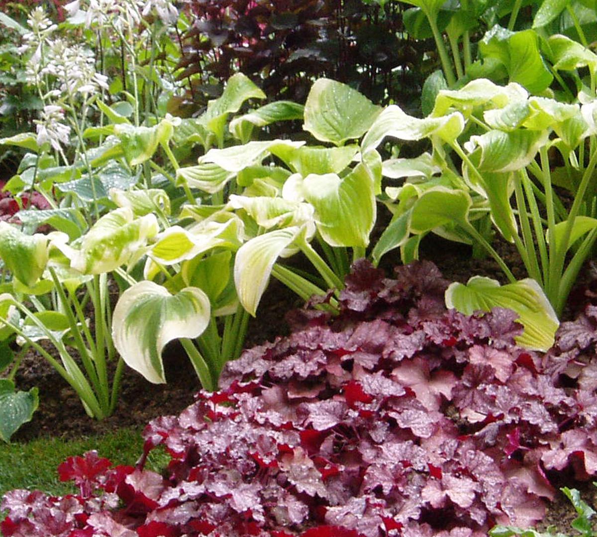 Art of Planting1